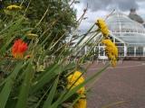 30.08.06 Glasgow Green PP Flowerbeds 026.jpg