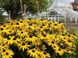 30.08.06 Glasgow Green PP Flowerbeds 030.jpg