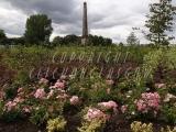 30.08.06 Glasgow Green PP Flowerbeds 071.jpg