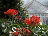 30.08.06 Glasgow Green PP Flowerbeds 085.jpg