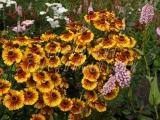 30.08.06 Glasgow Green PP Flowerbeds 128.jpg