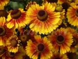 30.08.06 Glasgow Green PP Flowerbeds 134.jpg
