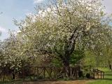 Springburn Park