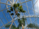 Winter Gardens Inside